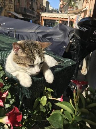 今日のマナローラ、猫たちの井戸端会議_a0136671_04404934.jpg