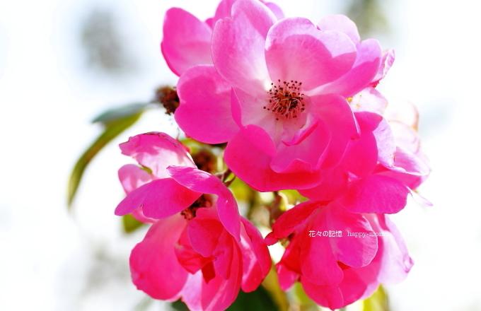 甘~い香り_c0357781_19094611.jpg