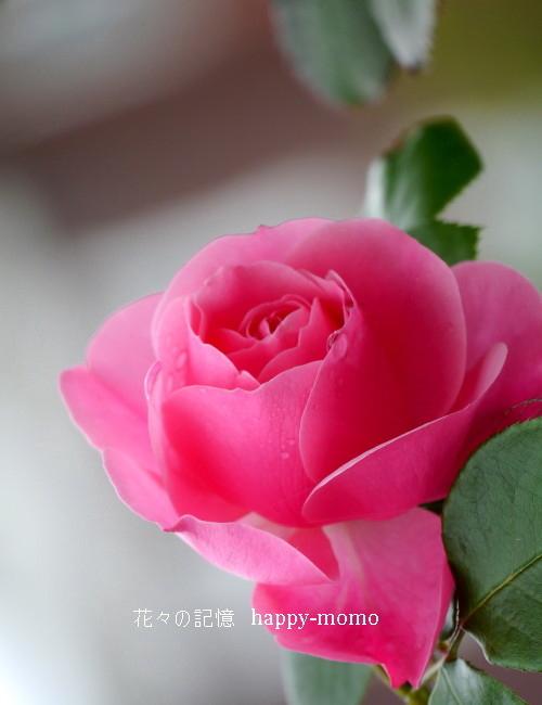 甘~い香り_c0357781_19100399.jpg