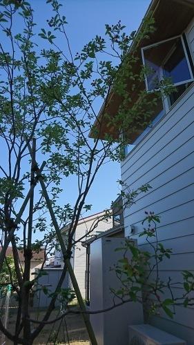 秋浜の家_f0191999_13491595.jpg