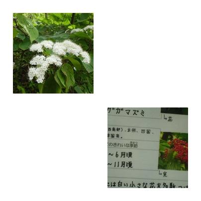 b0352112_11391573.jpg