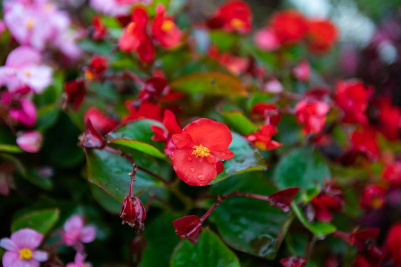 たまには花でも。_a0073742_21460795.jpg