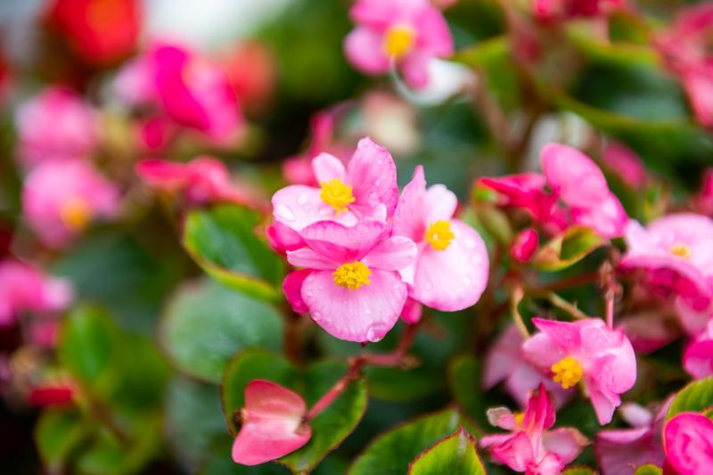 たまには花でも。_a0073742_21461071.jpg