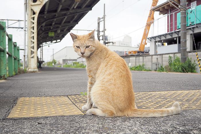 鶴見線猫の旅_b0049843_1243171.jpg
