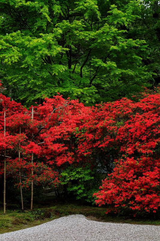 キリシマツツジの庭(曼殊院門跡)_f0155048_2351141.jpg