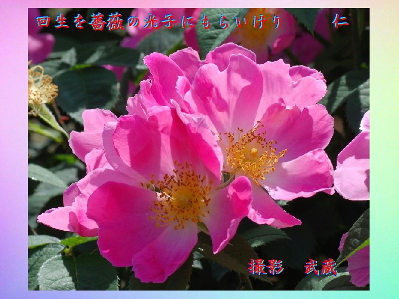 e0017651_20034759.jpg