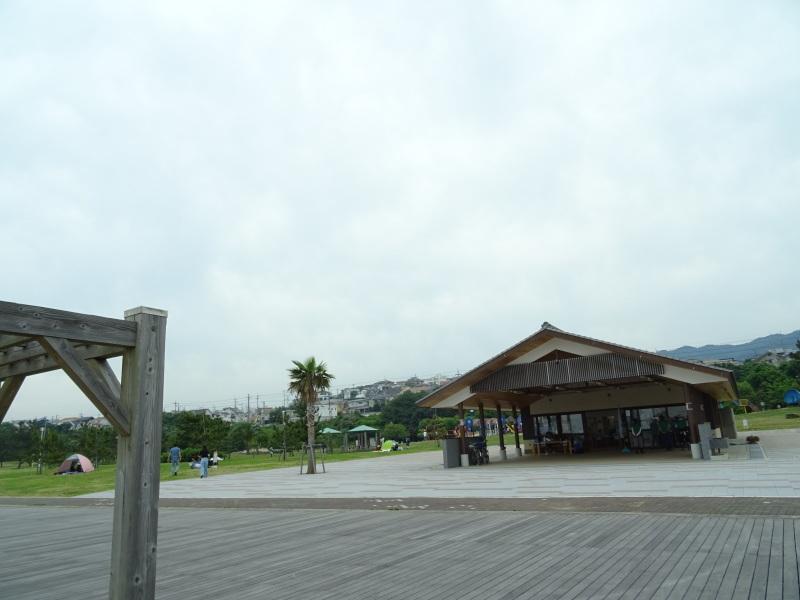 第12回「大阪湾生き物一斉調査」・・・せんなん里海公園_c0108460_20520147.jpg