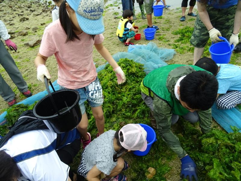 第12回「大阪湾生き物一斉調査」・・・せんなん里海公園_c0108460_20590093.jpg