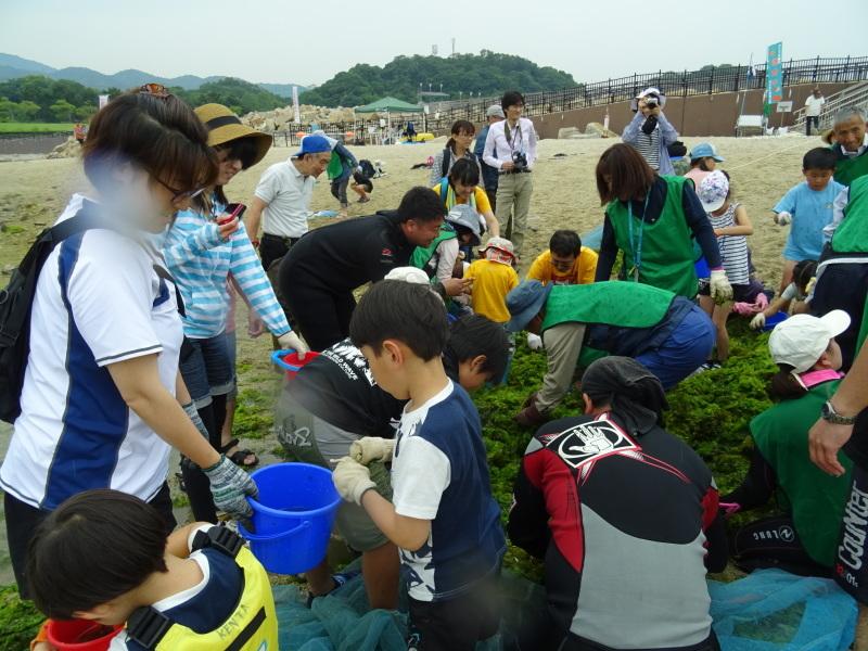 第12回「大阪湾生き物一斉調査」・・・せんなん里海公園_c0108460_20590140.jpg