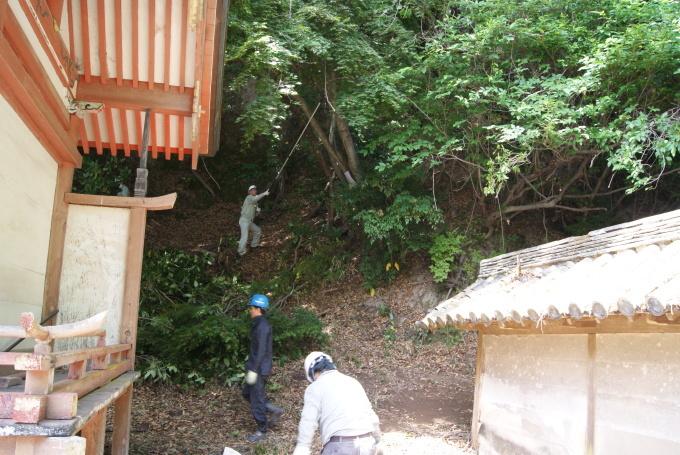 樹木の伐採 R1.05.31_f0191383_09400538.jpg
