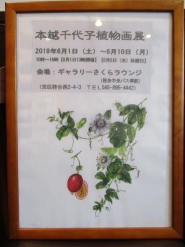 植物画展がはじまりました_e0190287_12143920.jpg