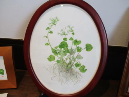 植物画展がはじまりました_e0190287_12153689.jpg