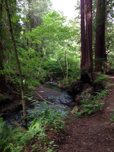 ハイキング Purisima Creek Redwoods_a0331910_13565483.jpg