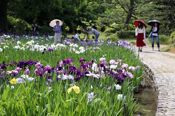 6月の植物園2 菖蒲園とアジサイ園_e0048413_21131364.jpg