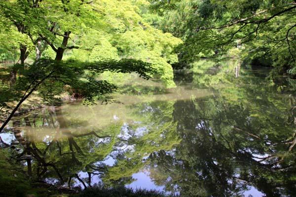6月の植物園2 菖蒲園とアジサイ園_e0048413_21132133.jpg