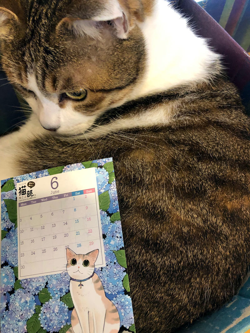 ローソンプリント・フェリシモ猫部さんミニカレンダーとイラスト_d0118933_13480606.jpg