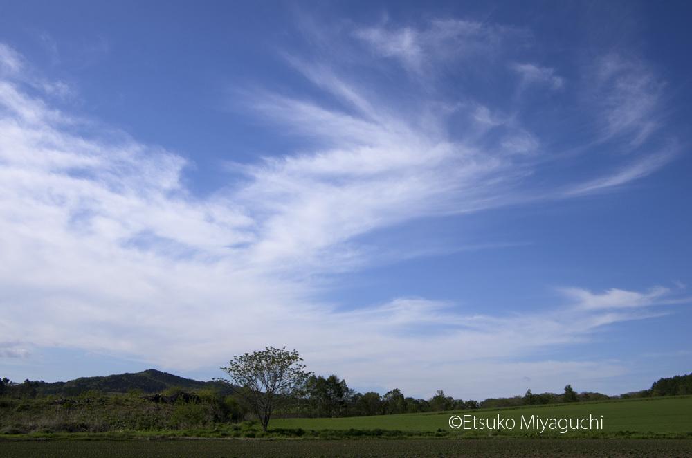 爽やか空と雲の日_f0152939_06501530.jpg