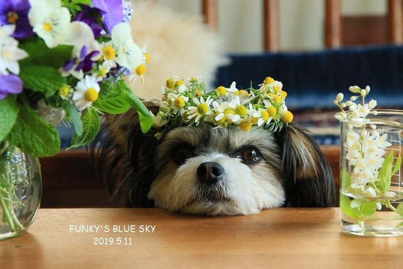 庭の小さなブーケ** (5月11日)_c0145250_20154525.jpg