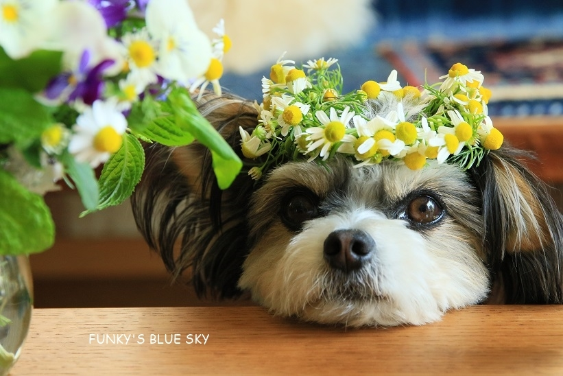 庭の小さなブーケ** (5月11日)_c0145250_20154981.jpg