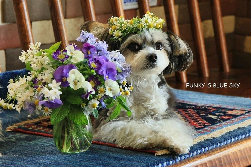 庭の小さなブーケ** (5月11日)_c0145250_20161072.jpg
