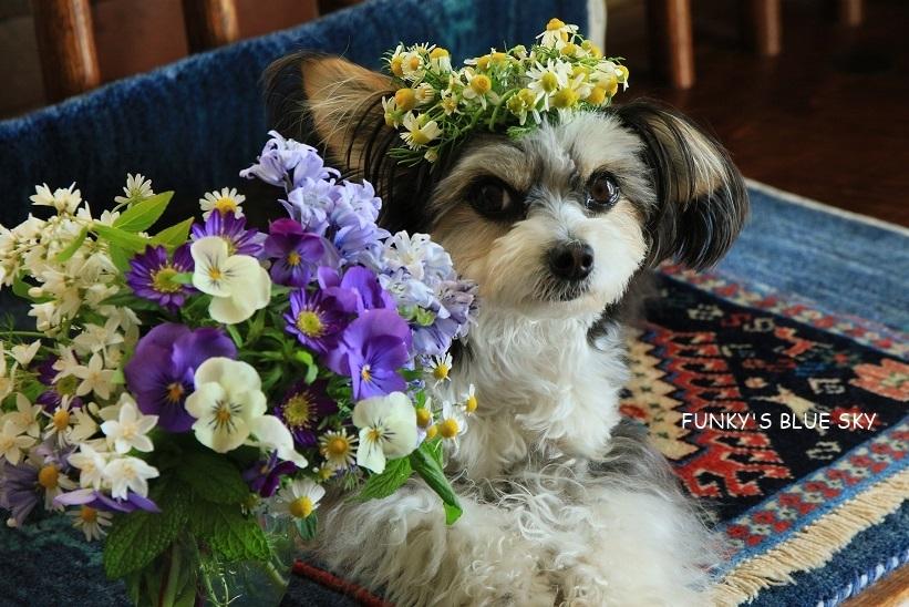 庭の小さなブーケ** (5月11日)_c0145250_20161403.jpg