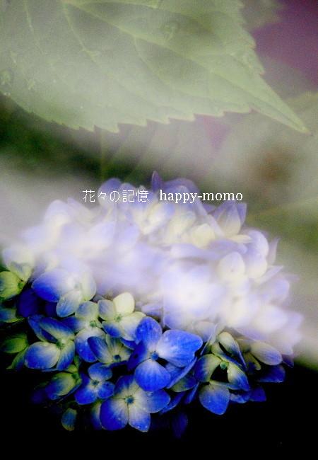 紫陽花模様_c0357781_14574702.jpg