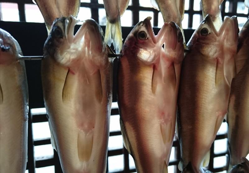 鮎(あゆ)漁 解禁_b0162386_13484804.jpg