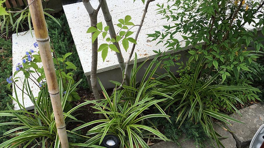 植栽の成長を見せてもらいました。_b0061387_22120901.jpg