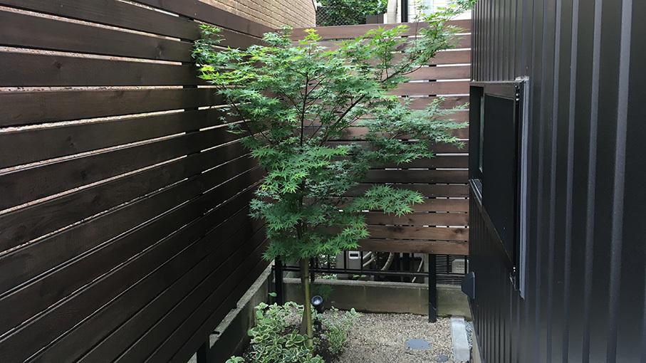 植栽の成長を見せてもらいました。_b0061387_22121058.jpg
