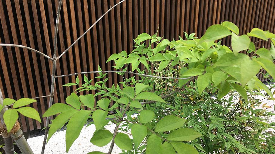 植栽の成長を見せてもらいました。_b0061387_22121088.jpg