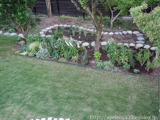 初夏の庭しごと 宿根草の植えつけ_c0293787_13044403.jpg