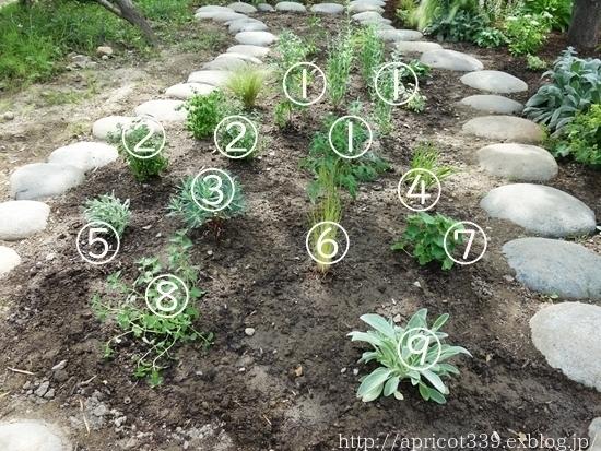 初夏の庭しごと 宿根草の植えつけ_c0293787_13045127.jpg