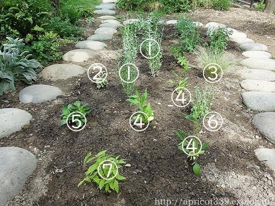 初夏の庭しごと 宿根草の植えつけ_c0293787_13050175.jpg