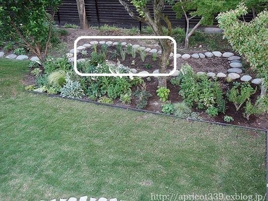 初夏の庭しごと 宿根草の植えつけ_c0293787_13532642.jpg