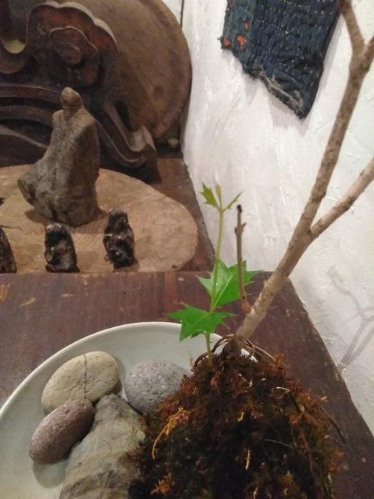 柊の新芽。その後。_e0350308_16501074.jpg