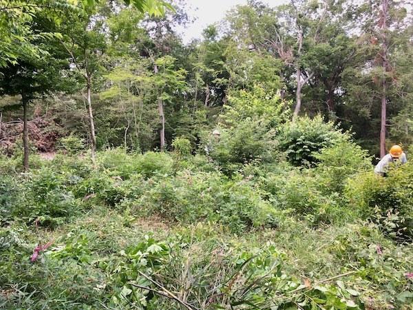 薪のための森林作業_b0038919_09151920.jpg