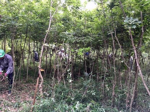薪のための森林作業_b0038919_09181308.jpg
