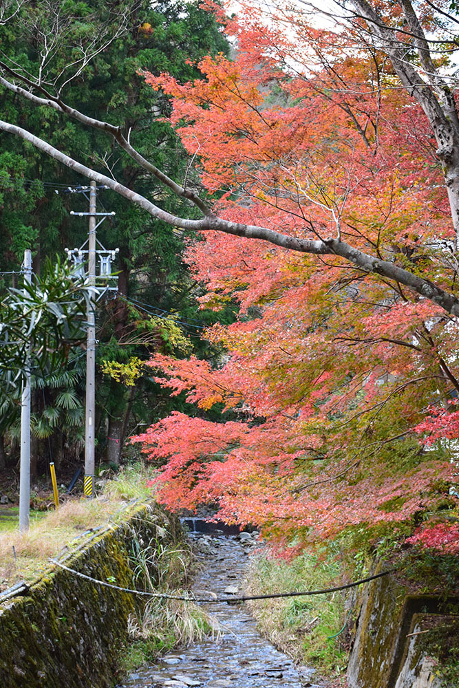 室町時代の庭園が残る多気北畠氏城館跡を訪ねて。<前編> 北畠神社_e0158128_11502429.jpg