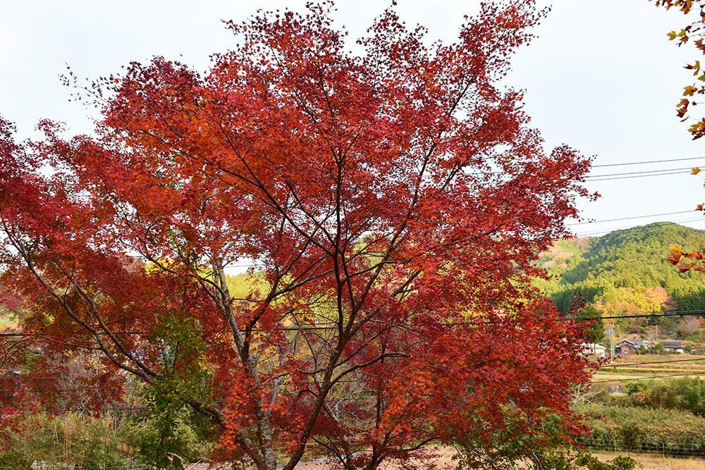 室町時代の庭園が残る多気北畠氏城館跡を訪ねて。<前編> 北畠神社_e0158128_12122650.jpg