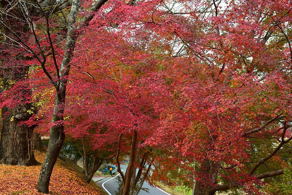 室町時代の庭園が残る多気北畠氏城館跡を訪ねて。<前編> 北畠神社_e0158128_12123000.jpg