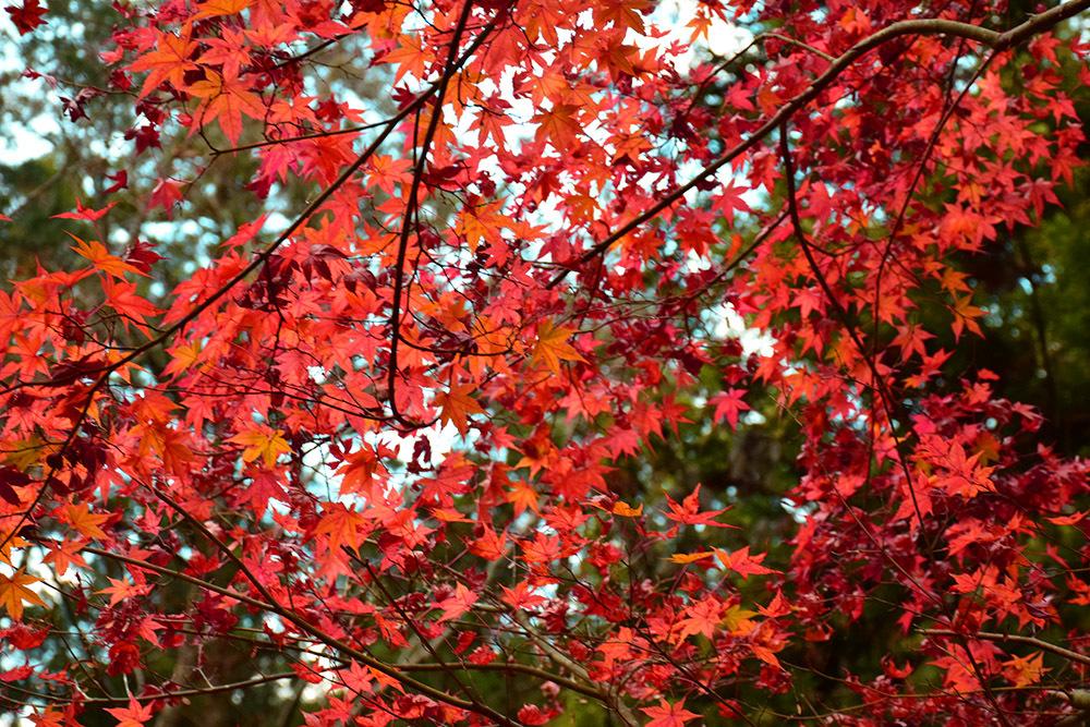 室町時代の庭園が残る多気北畠氏城館跡を訪ねて。<後編> 武家庭園_e0158128_14143206.jpg