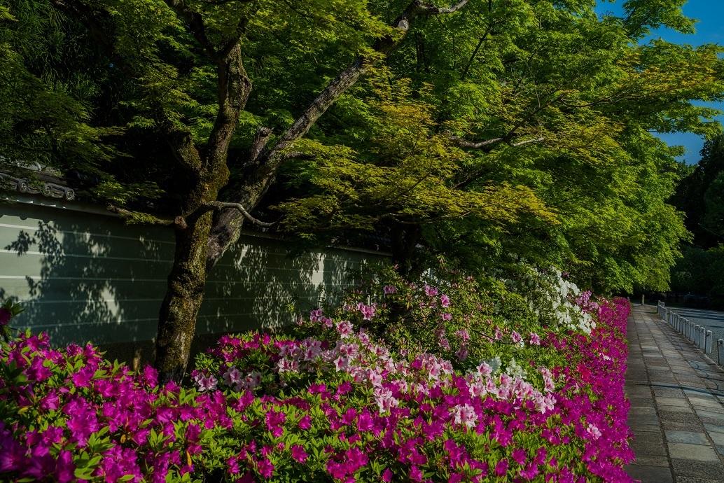 妙満寺~つつじが咲く頃_e0363038_15354142.jpg