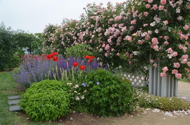 薔薇園_c0202242_10192468.jpg
