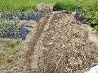 生姜が畑に行きたいと言うので・・・南国畑_c0330749_18531083.jpg