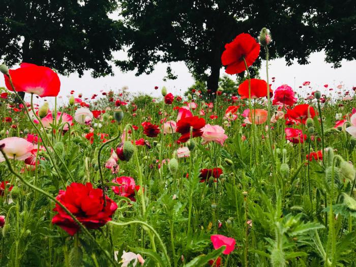 花フェスタ記念公園_e0233674_10201430.jpg