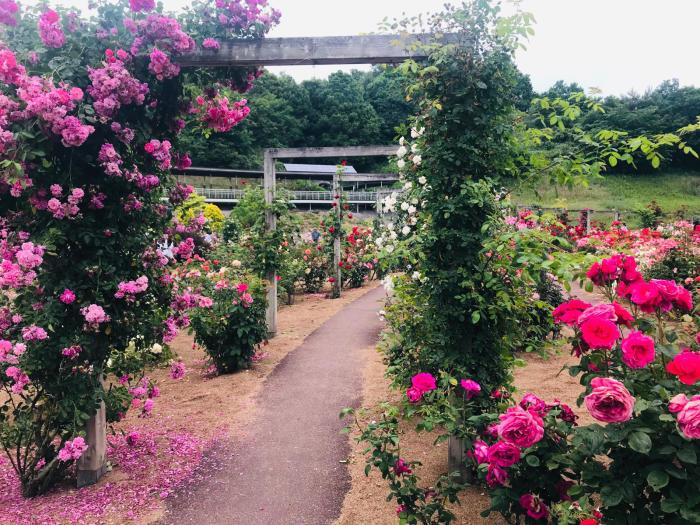 花フェスタ記念公園_e0233674_10201452.jpg
