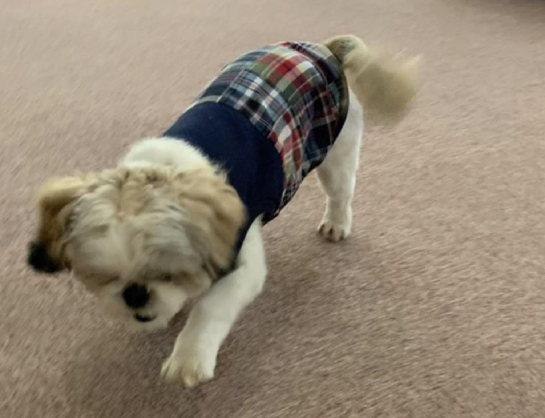 ★インド綿で涼しく♪小型犬ドッグウェア★_b0400675_15324978.jpg