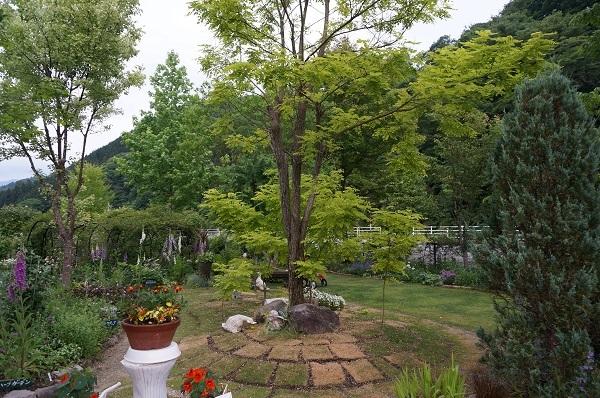 夕方のノラの庭_e0365880_21190934.jpg