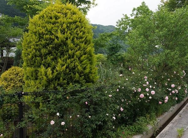 夕方のノラの庭_e0365880_21201290.jpg