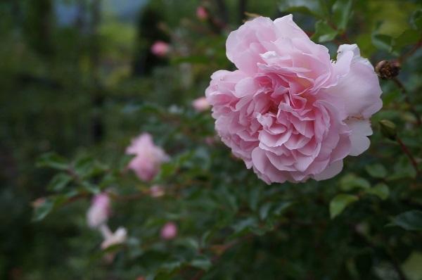 夕方のノラの庭_e0365880_21204857.jpg